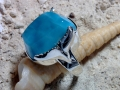 Tursi/Talon Larimar Ring