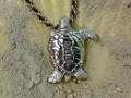 Montel the Sea Turtle
